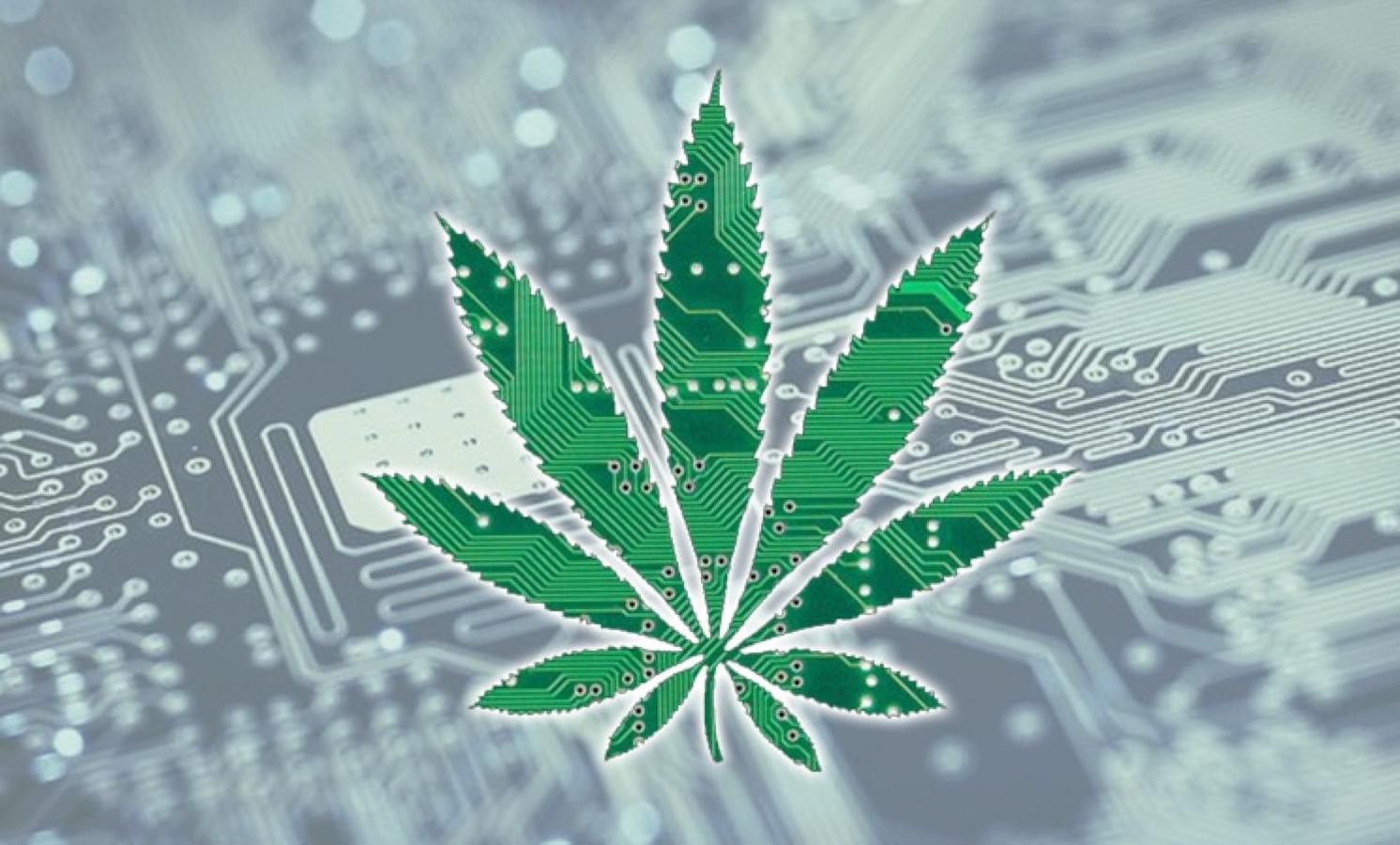 Cannabis Industry Business Loans