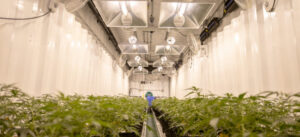 Cannabis Business Equipment That May Be Financed